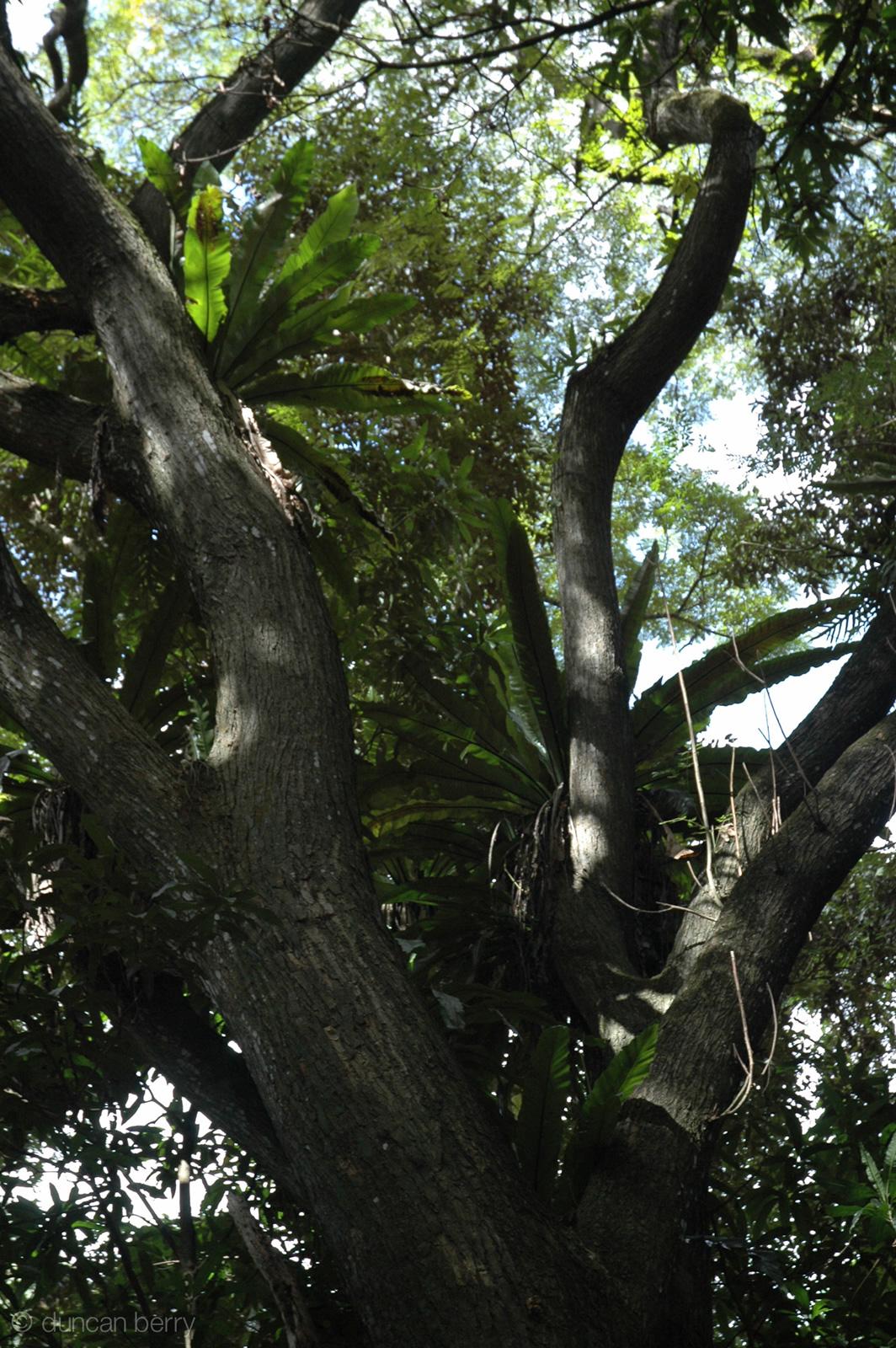 molokai-images-19
